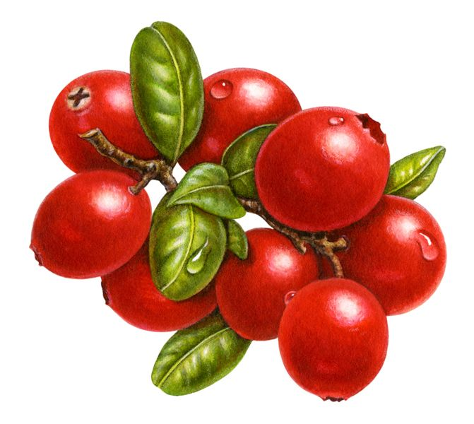best vegetables and. Berries clipart cranberry
