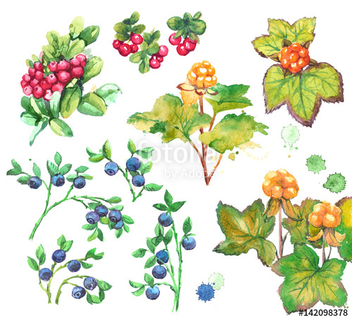 Berries clipart forest berry. Set of with leaves