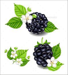 Blackberries png vector image. Berries clipart forest berry