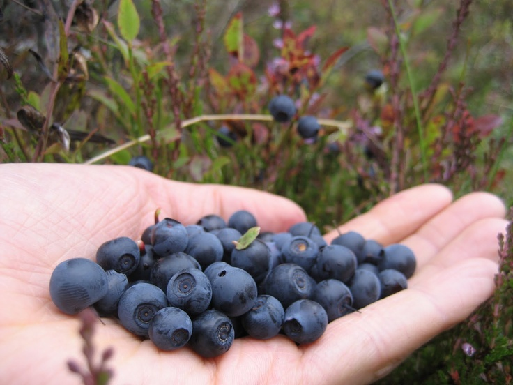 The finnish natural clipground. Berries clipart forest berry