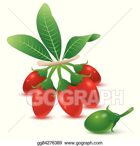Berry clipart goji berries. Vector stock illustration gg