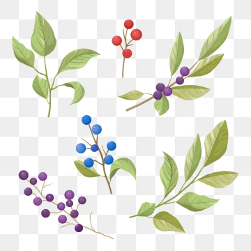Berry png vector psd. Berries clipart illustration