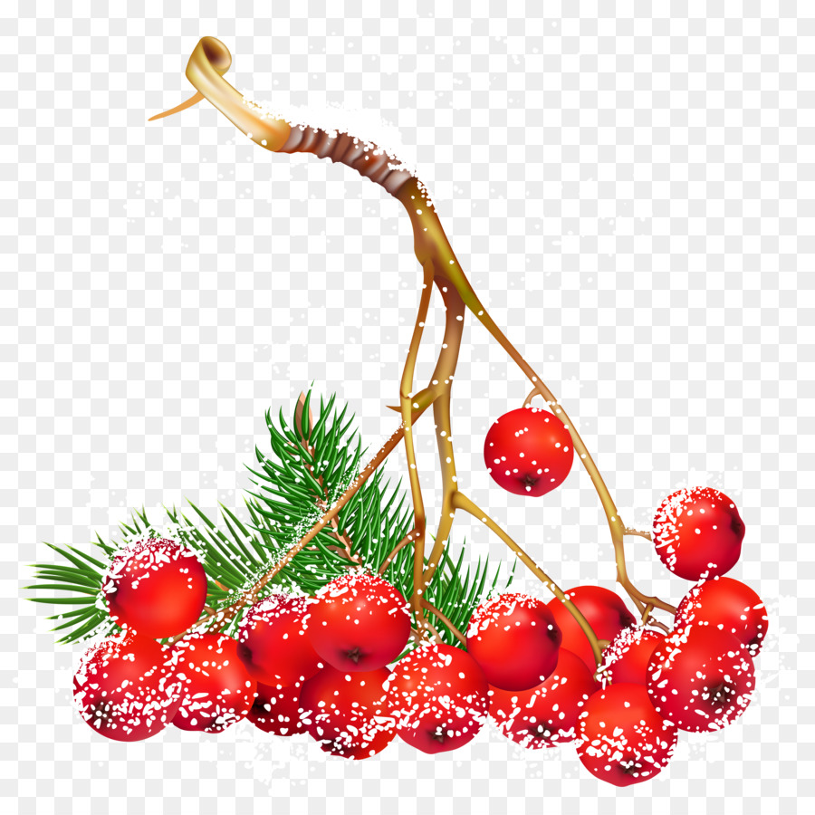 Christmas clip art fruit. Berries clipart illustration