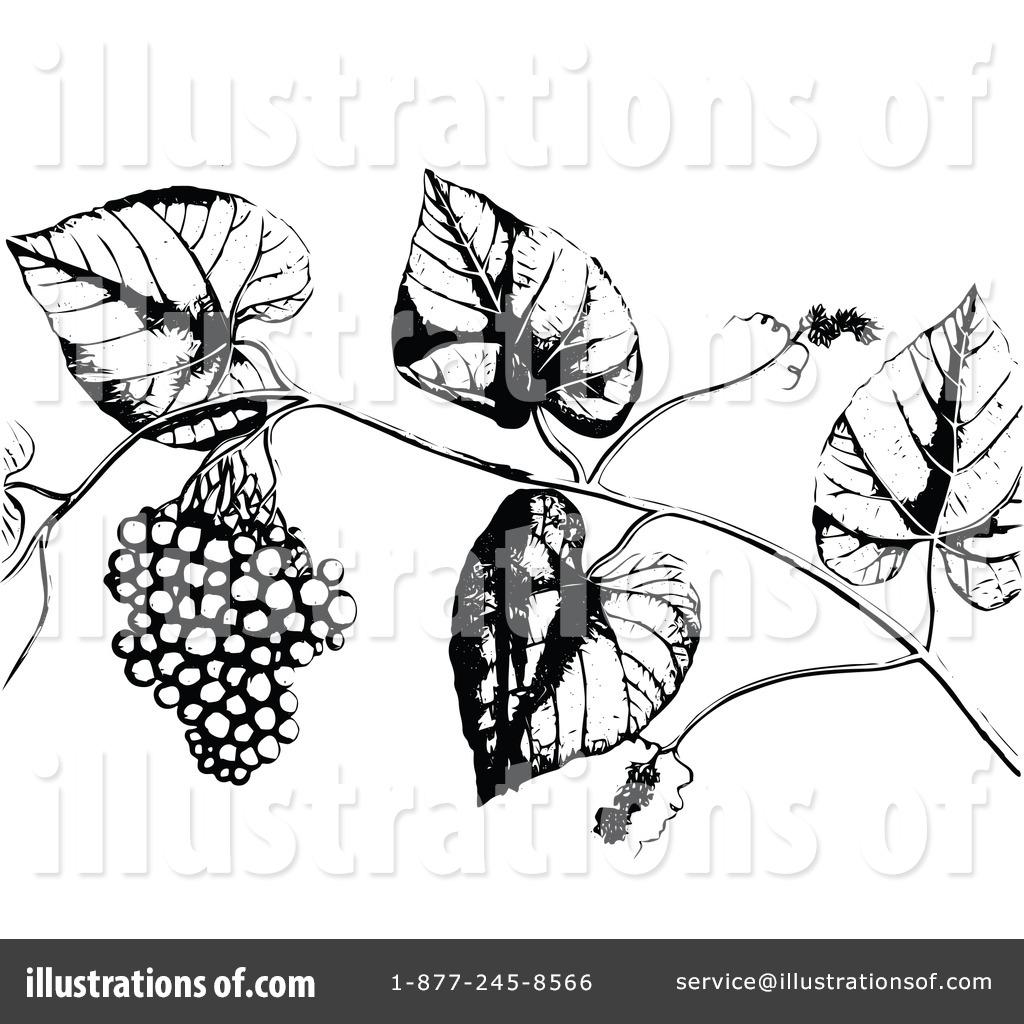 Berries clipart illustration. By prawny vintage royaltyfree