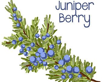 Berry Clip Art Fruit Clipart
