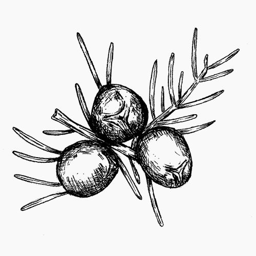 Free spirit tattoo tattoos. Blueberries clipart juniper berry