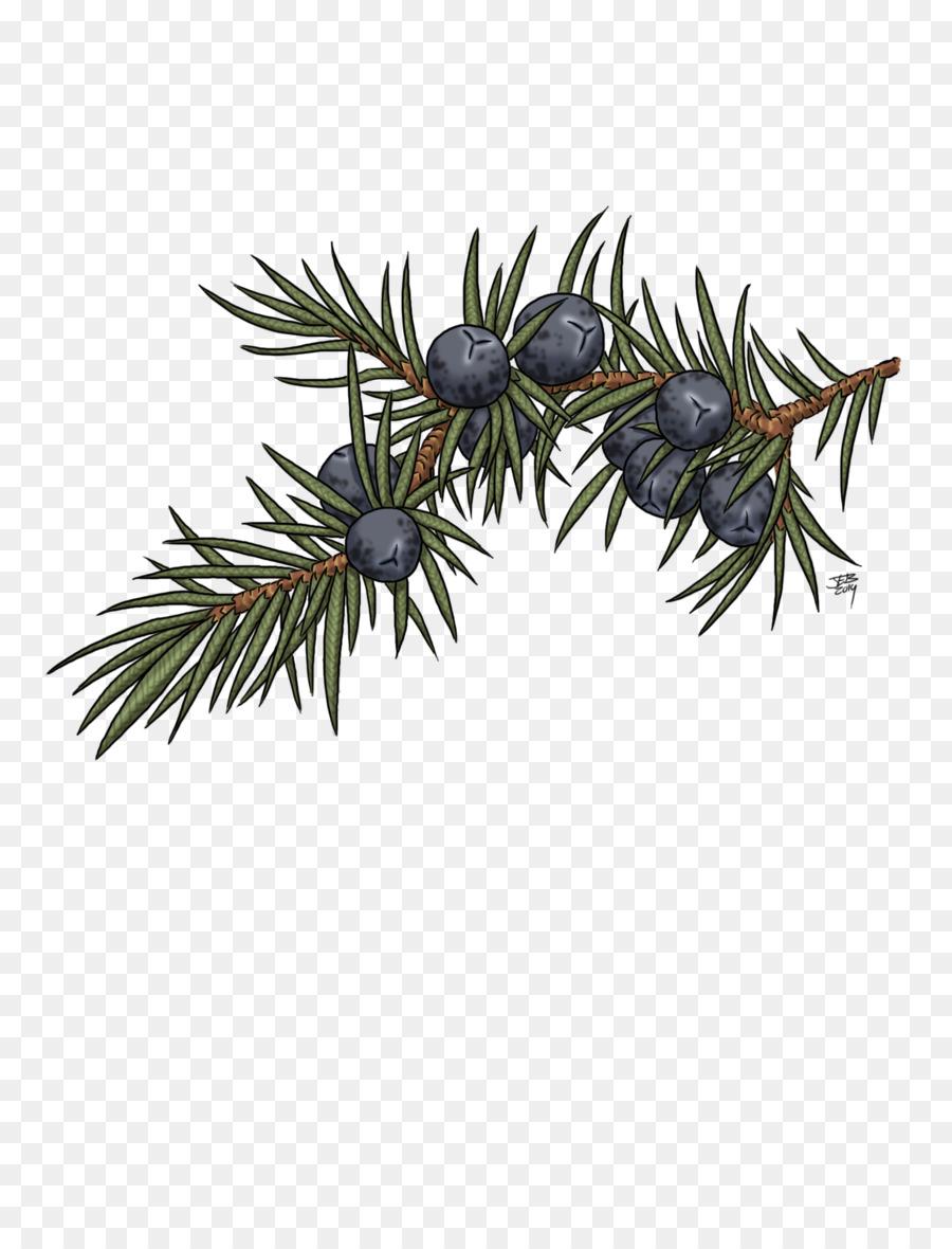 Blueberry clipart juniper berry. Drawing art tree berries