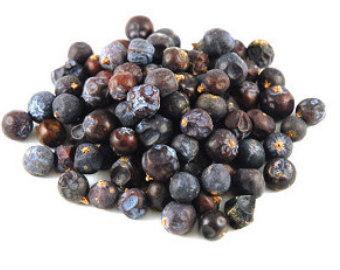 Blueberries clipart juniper berry. Berries etsy