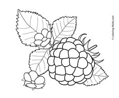Berries clipart mix. Gooseberry fruits and coloring