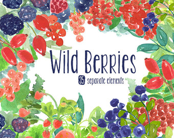 Berries clipart mixed berry. Wild etsy watercolor hand