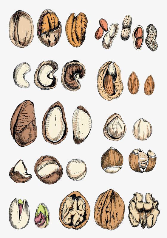 Berries clipart nuts. Cartoon hand painted snacks