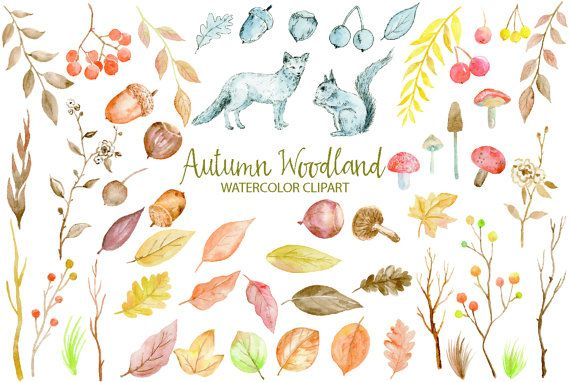 Watercolor autumn woodland fox. Berries clipart nuts