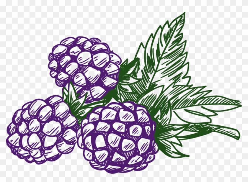 Blackberry black . Blueberry clipart purple berry