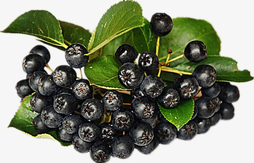 Berries clipart purple berry. Wild product kind delicious