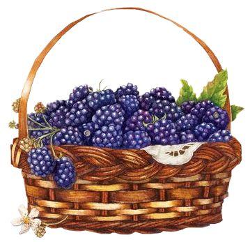 Blueberries clipart blueberry basket.  best clip art