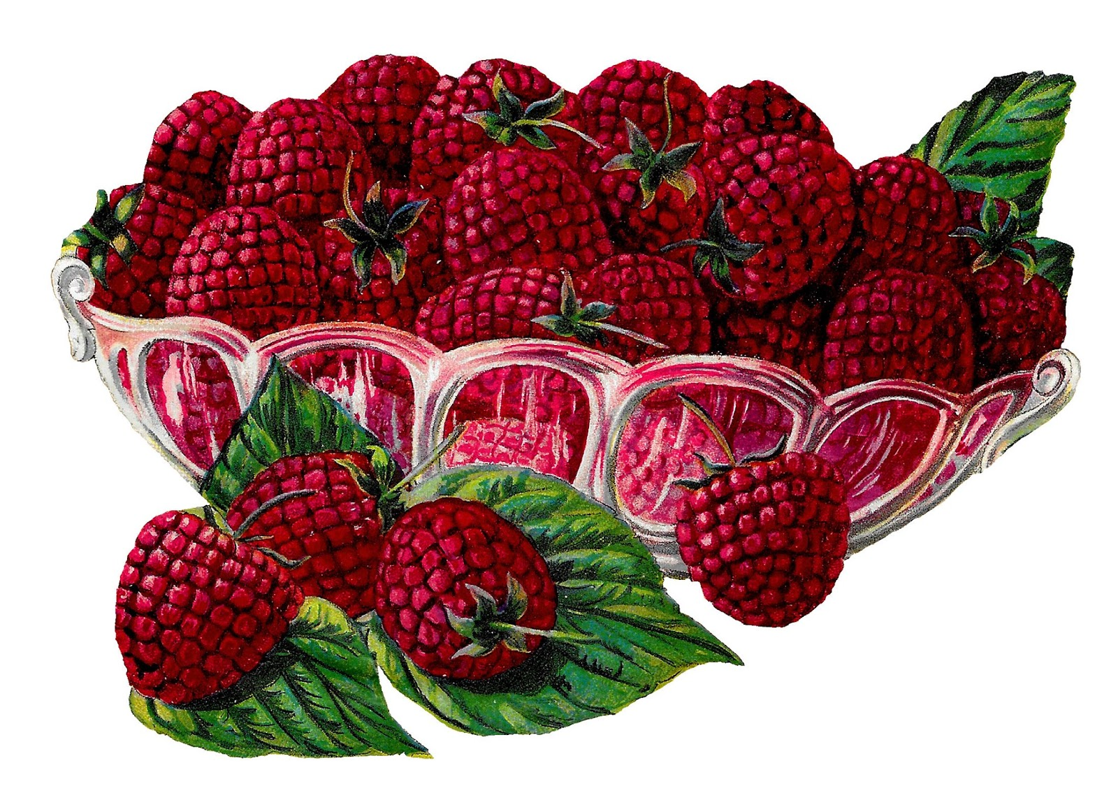Antique images royalty free. Berries clipart raspberry