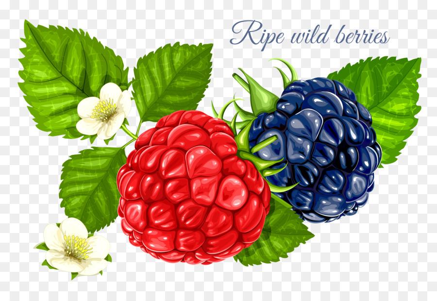 Berries clipart raspberry. Frutti di bosco red