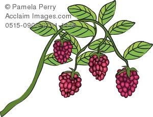 Clip art illustration of. Berries clipart raspberry