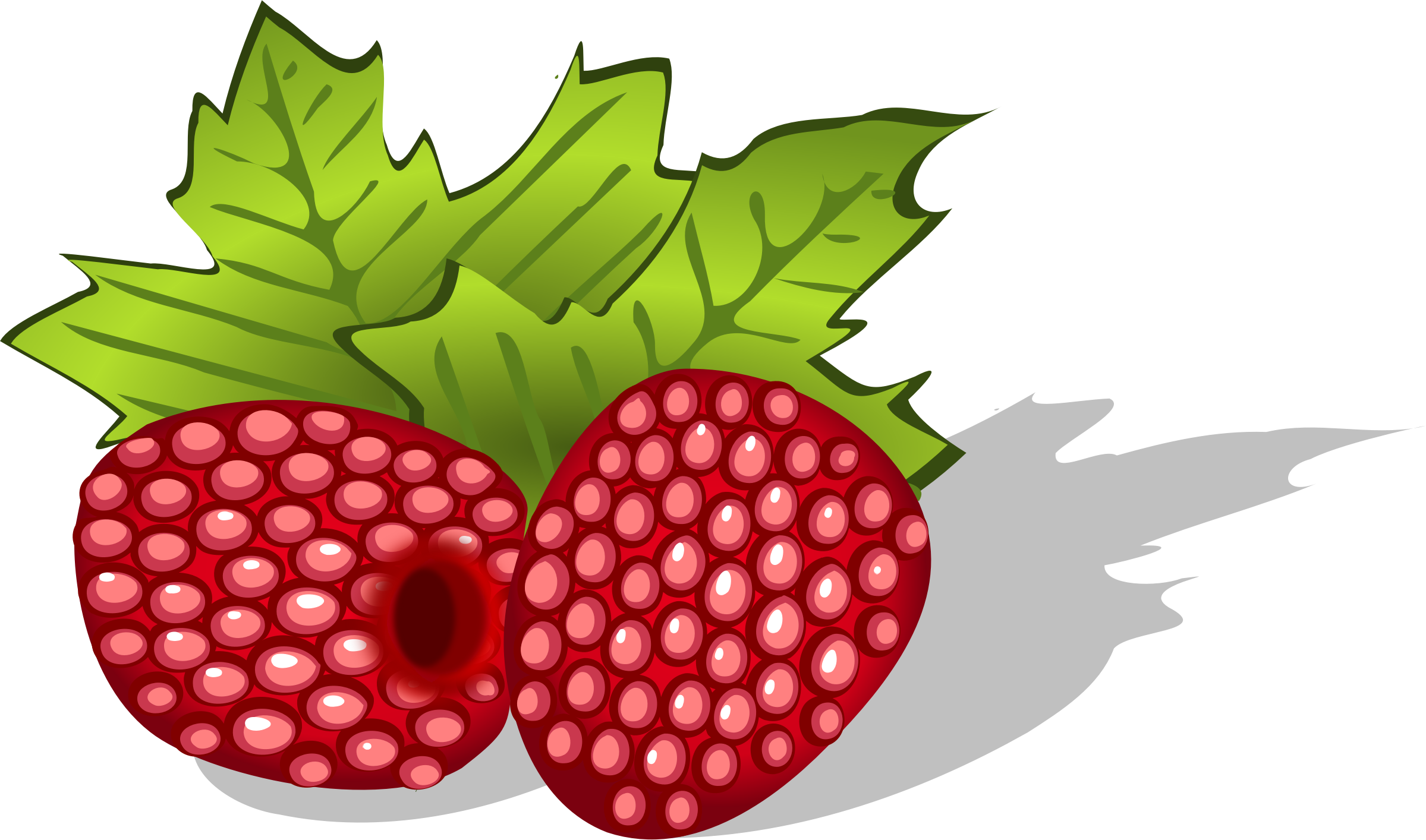 Raspberries avietes berries uogos. Bushes clipart raspberry