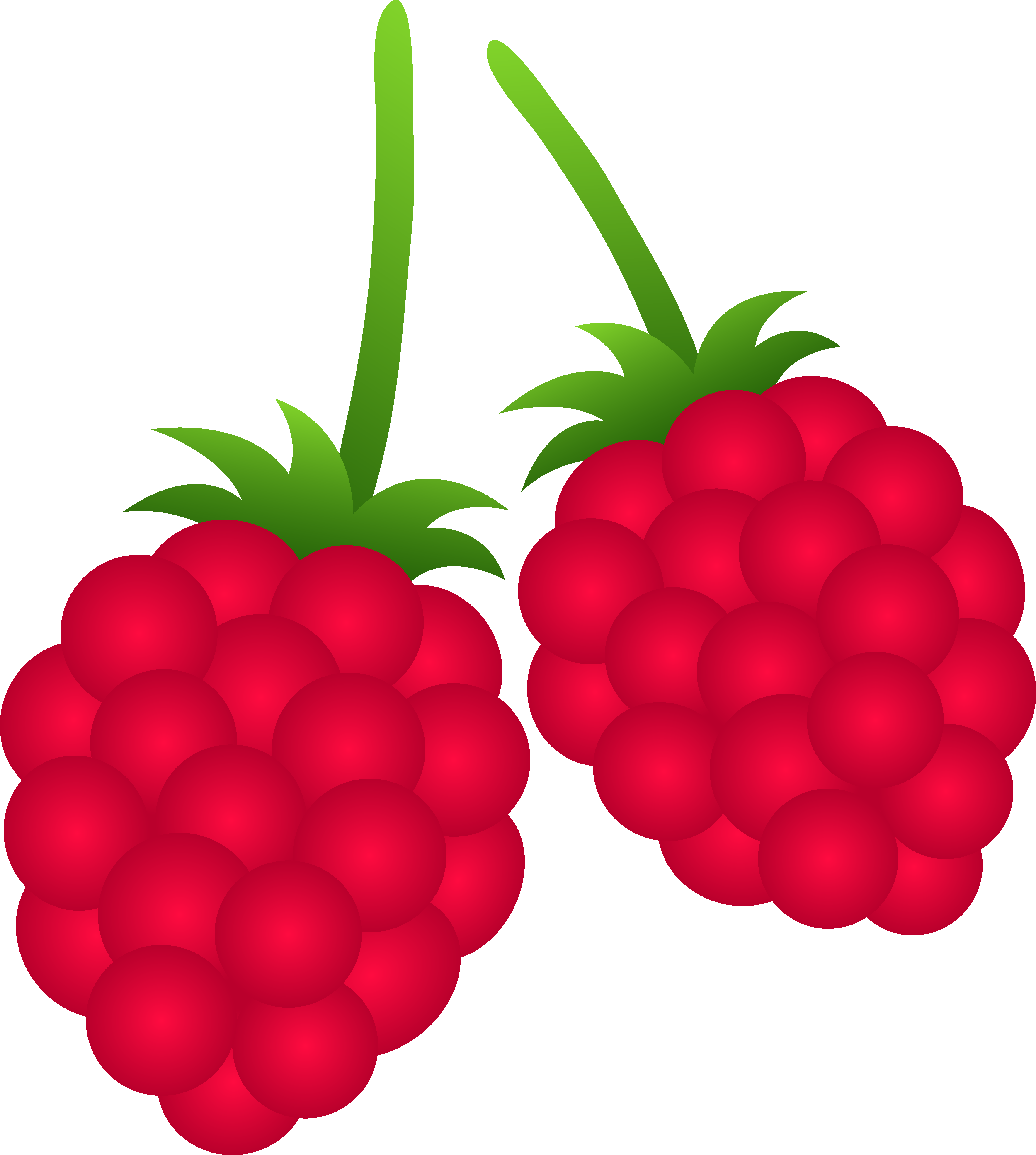 Two raspberries free clip. Berries clipart raspberry