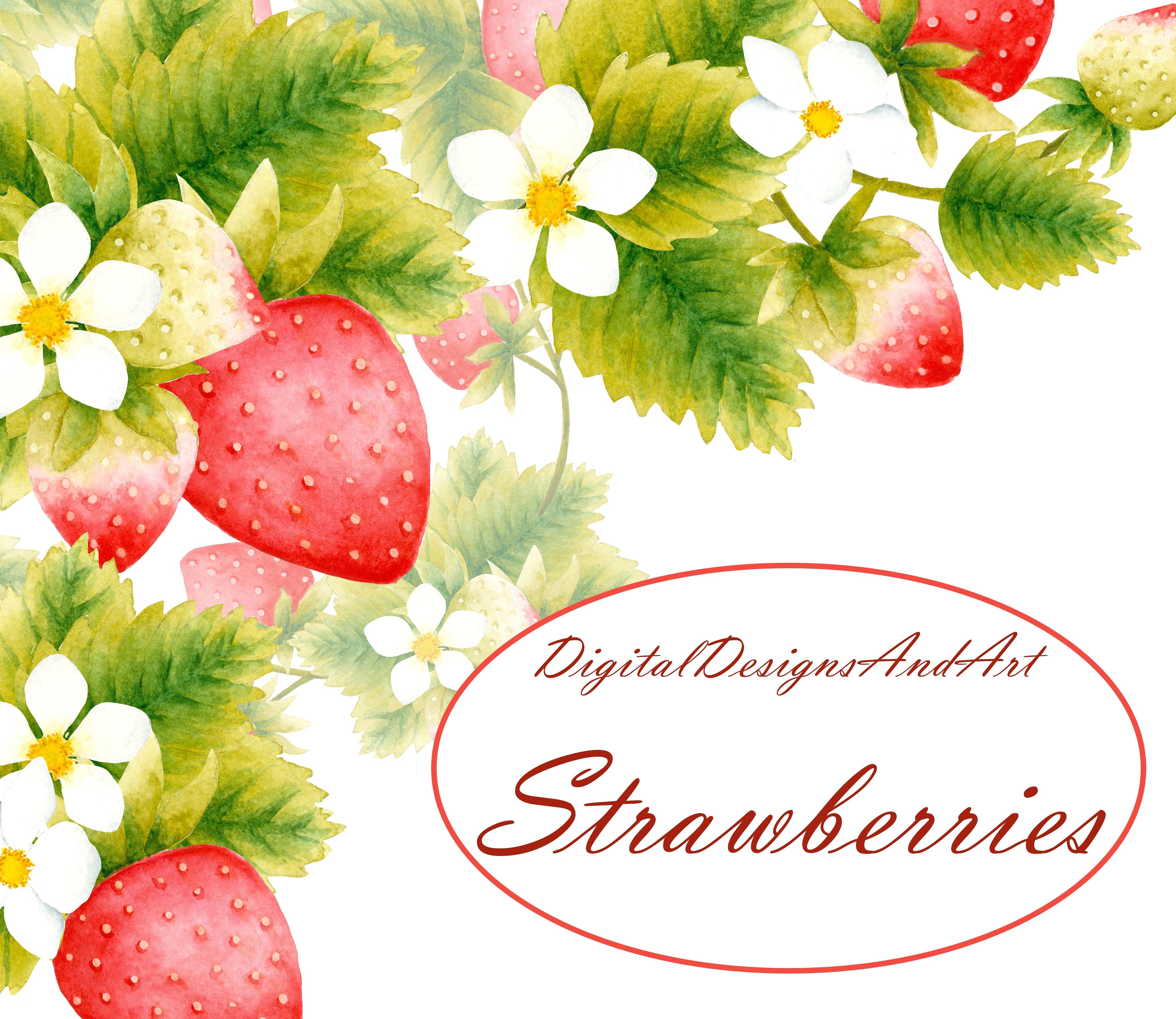 Strawberry illustrations creative market. Berries clipart single