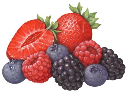 Berries clipart strawberry blueberry.  best berry illustrations