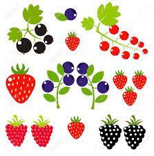 Image result for fruit. Berries clipart summer