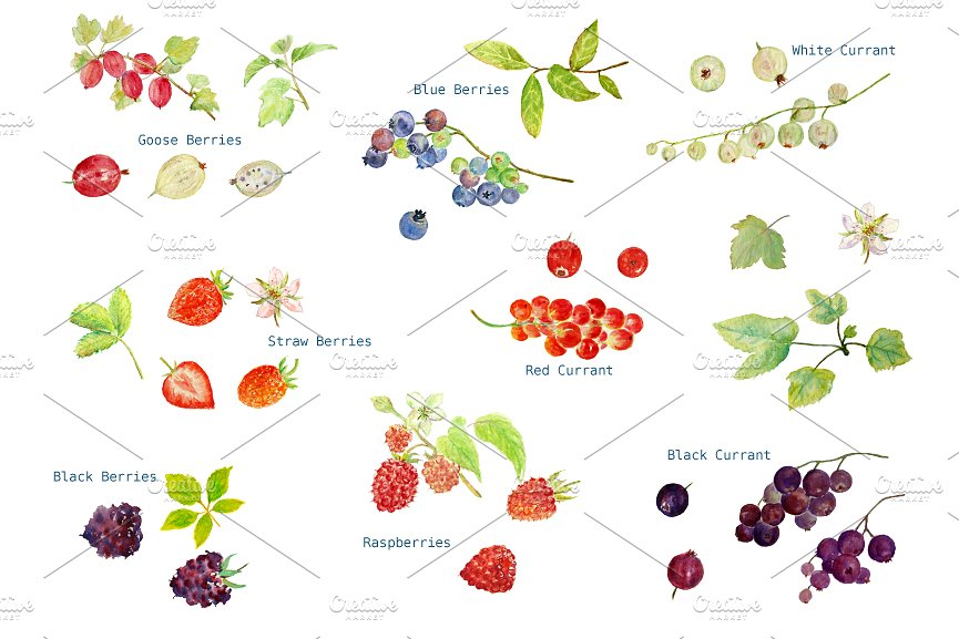 Berries clipart summer. Watercolor soft fruit illustrations