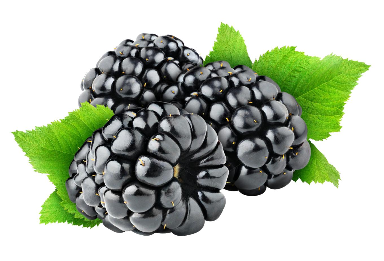 Blackberry fruit png images. Berries clipart transparent background