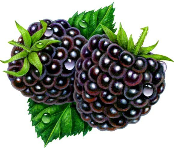 Berries clipart two.  best fruit clip