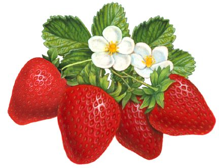 berries clipart two #30992902