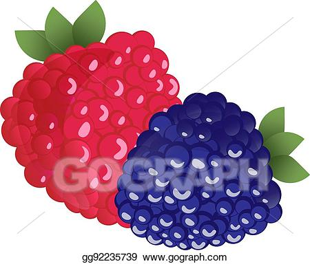 Vector ripe raspberries and. Berries clipart two