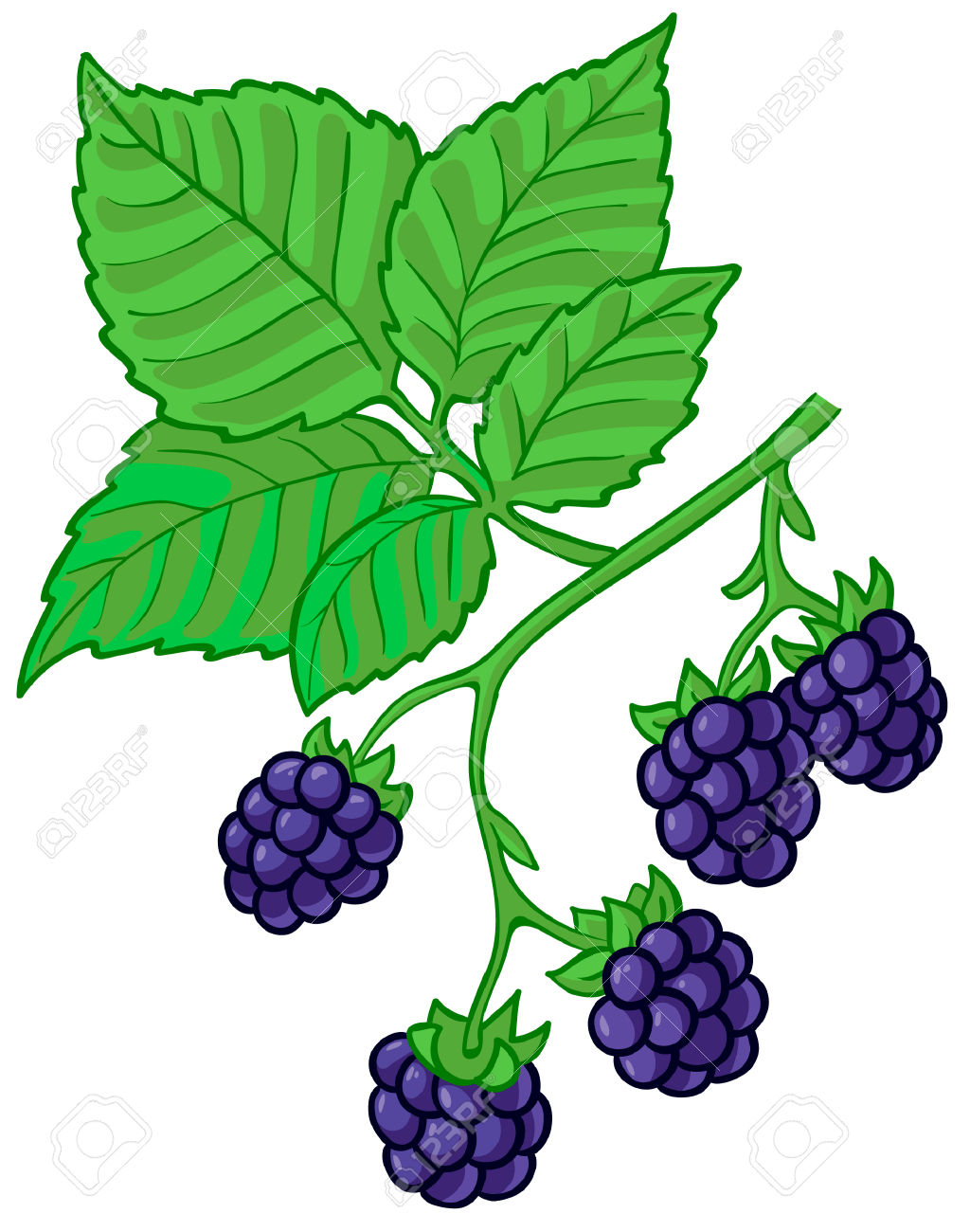 Berries clipart vector. Berry blackberry bush pencil