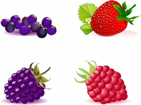 Berry clipart vector. Free download for