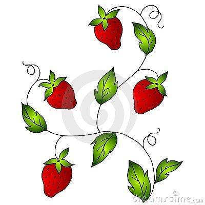 Berries clipart watermelon vine. Border panda free images