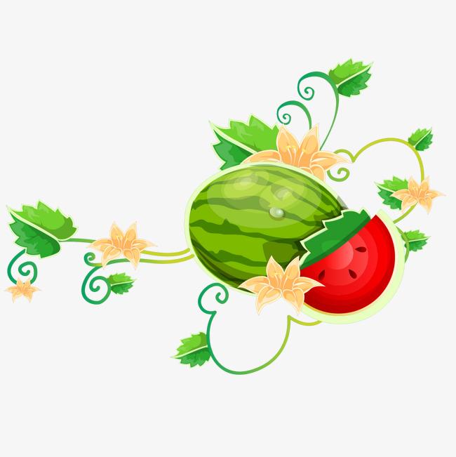 Melon png images vectors. Berries clipart watermelon vine
