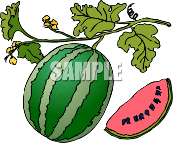 Berries clipart watermelon vine. Picture of a on