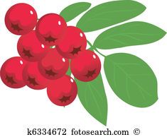 collection of red. Berries clipart wild berry