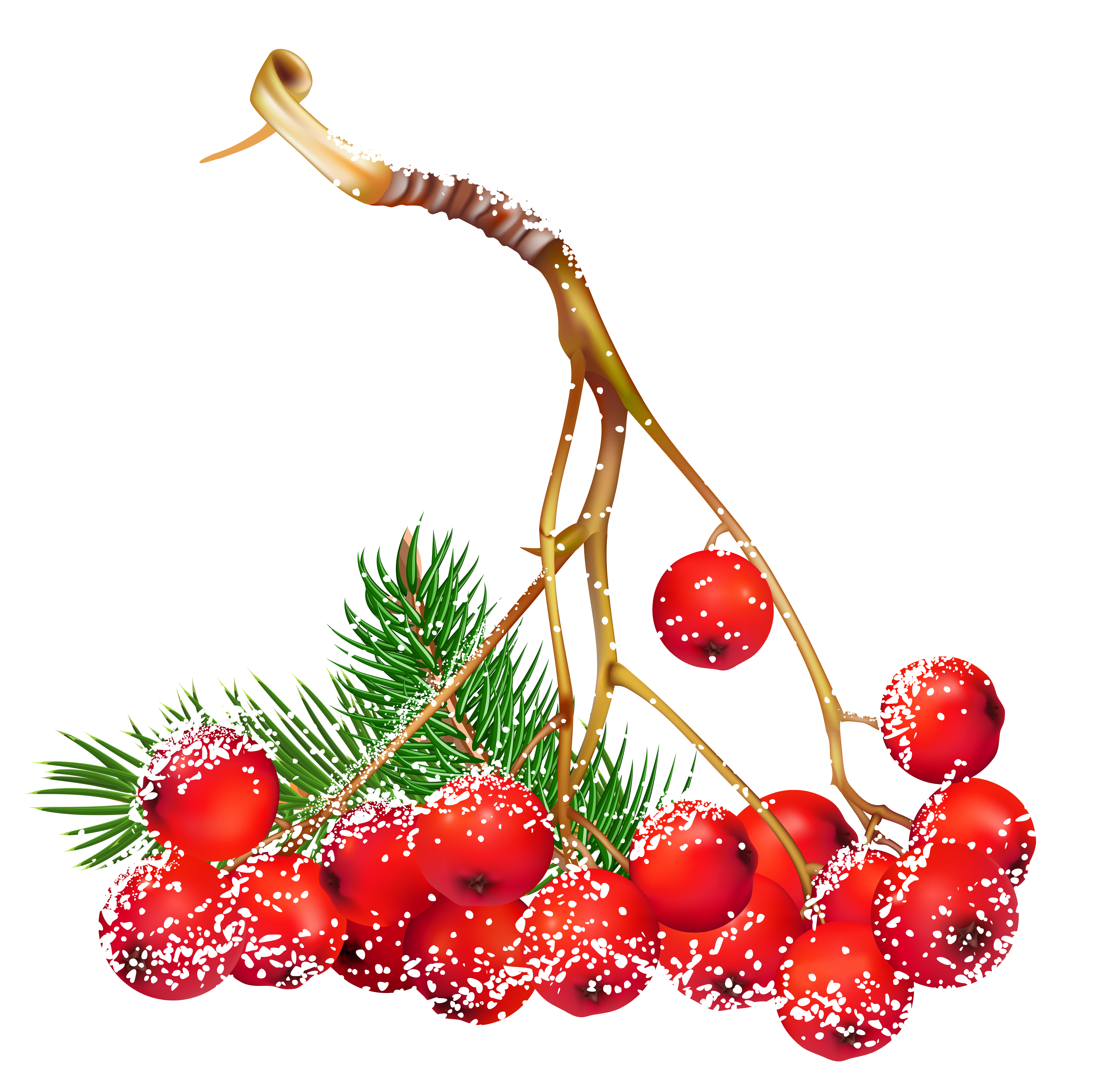 Berries clipart winter. Transparent christmas snowy holly