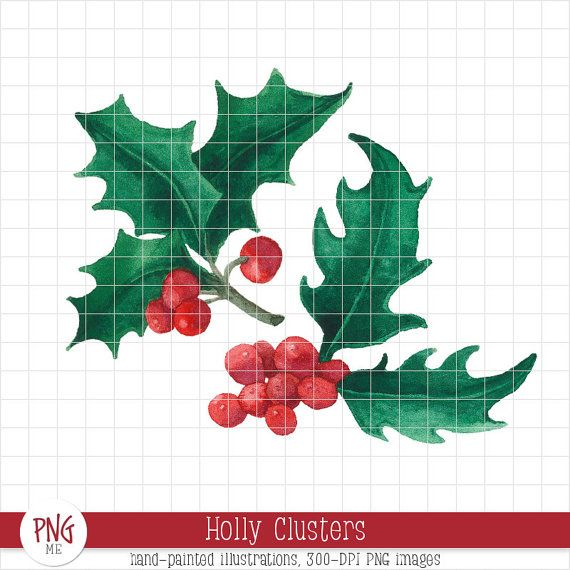 Holly clusters watercolor leaves. Berries clipart winter