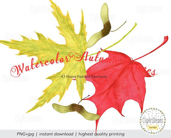 Berry clipart autumn berry. Watercolor leaves branches