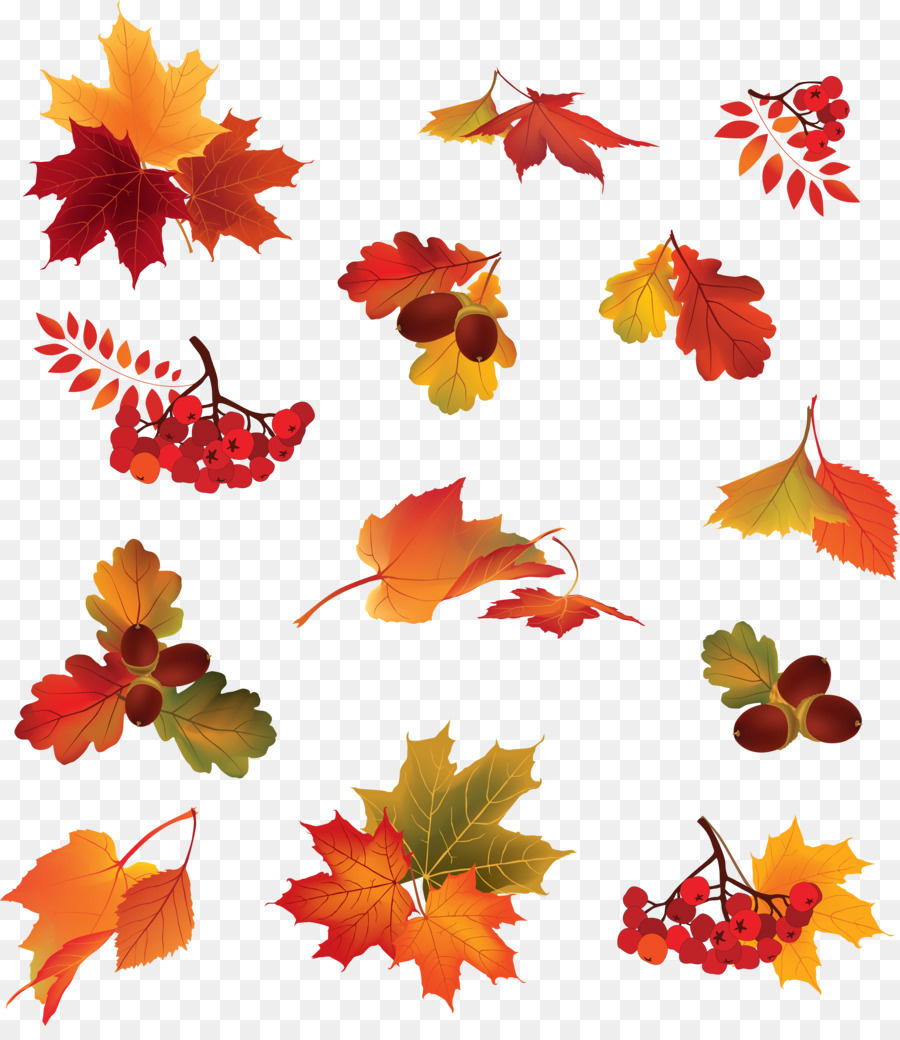 Berry clipart autumn berry. Leaf color leaves png