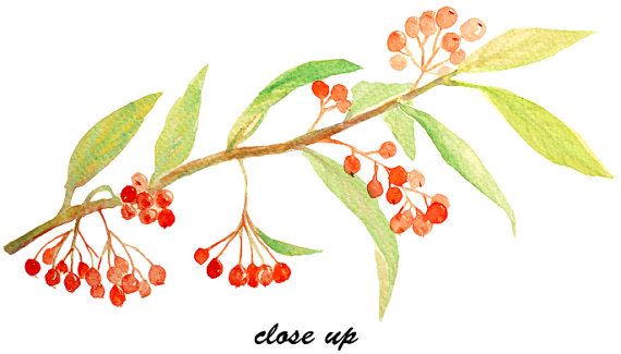 Hand painted watercolor berries. Berry clipart autumn berry