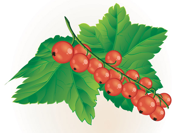 Berries clipart clip art.  collection of wild