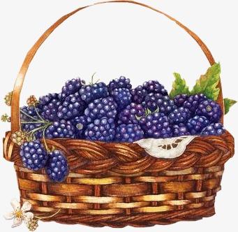 Of raspberries wild fruit. Berry clipart berry basket
