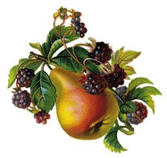Berry clipart berry basket. Free on dumielauxepices net