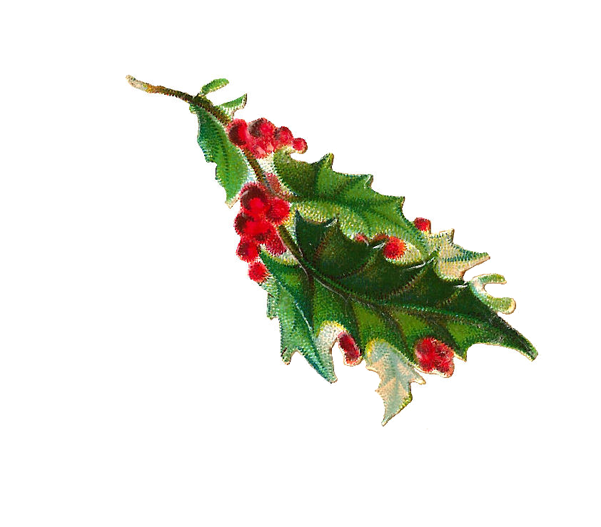 Holly clipart holly branch. Antique images free christmas