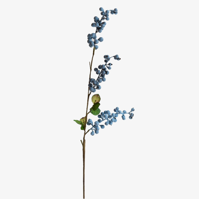 Blueberry plant simulation high. Blueberries clipart branch