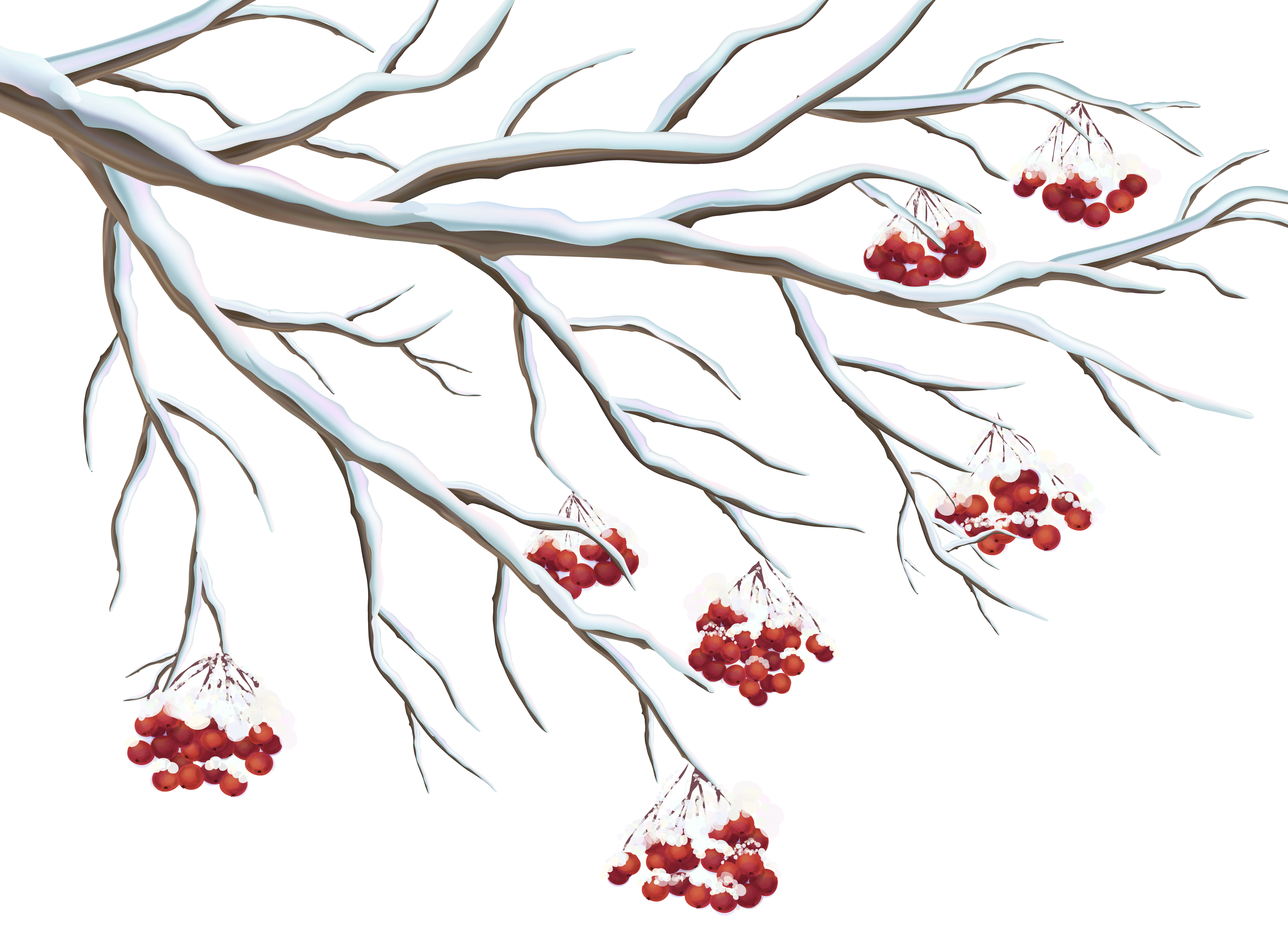 Snowy Holly Berries PNG Clipart