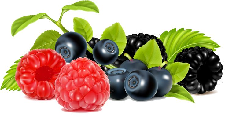 berry clipart berry fruit #31048188